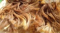 Отдается в дар Конский волос.