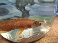 Отдается в дар Рыбки с аквариумом!