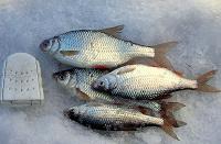Отдается в дар Рыба плотва 15 хвостов