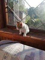 Отдается в дар Котёнок