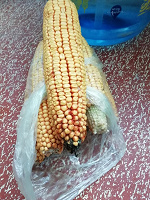 Отдается в дар Кукуруза (на корм животным)