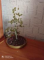Отдается в дар Дерево из бисера.