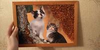 Отдается в дар Картинка с котиками и камушками)