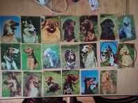 Отдается в дар открытки с собаками
