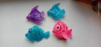 Отдается в дар Рыбы