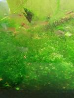 Отдается в дар Растения в аквариум