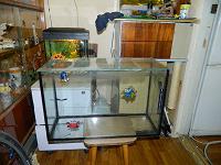 Отдается в дар аквариум-террариум