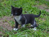 Отдается в дар Еще одно семейство котят в добрые руки