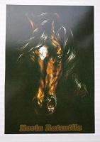 Отдается в дар Финская открытка с конём