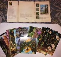 Отдается в дар Набор открыток «Лекарственные растения»
