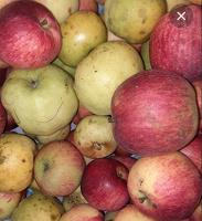 Отдается в дар Дачные яблоки — 3