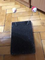 Отдается в дар Игрушка для котёнка