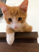 Отдается в дар Котёнок Джони 3 месяца