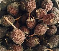 Отдается в дар Сушеные ягоды боярышника красного
