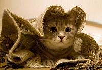 Отдается в дар Монетный кот в мешке.