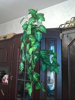 Отдается в дар искусственная лиана высота приблизительно 1 метр