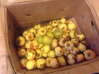 Отдается в дар Яблоки натуральные