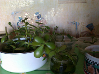 Отдается в дар Растения в дар