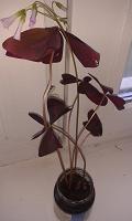 Отдается в дар Цветы