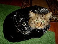 Отдается в дар Косметический котик