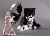 Отдается в дар Бижутерный котик!