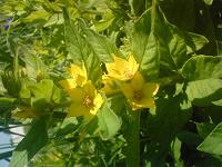 Отдается в дар рассада цветочков