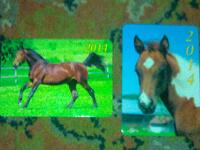 Отдается в дар Карманные календарики с лошадьми