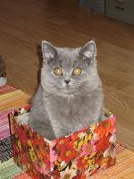 Отдается в дар Косметический кот 2