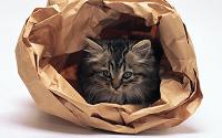 Отдается в дар Бумажный кот в мешке
