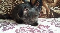 Отдается в дар Кролик. Срочно отдам кролика!
