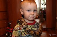 Отдается в дар аренда змей для фотосессий