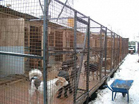 Отдается в дар Отвезу в приют для собак в Солнцево