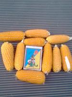 Отдается в дар кукуруза на посадку