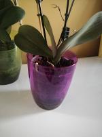 Отдается в дар Цветки орхидеи