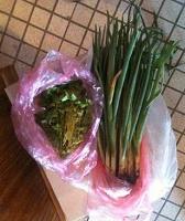 Отдается в дар Домашний зеленый лук и петрушка