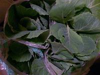 Отдается в дар рассада белокачанной капусты