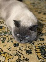 Отдается в дар Кошка