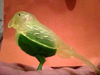 Отдается в дар Птица