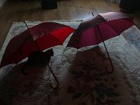 Отдается в дар зонт трость