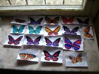 Отдается в дар Акварельные бабочки