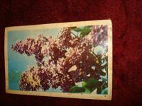 Отдается в дар открытка СССР 4