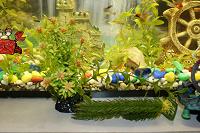 Отдается в дар для аквариума