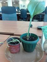 Отдается в дар Разные комнатные растения