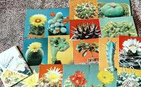 Отдается в дар Набор открыток«Кактусы»