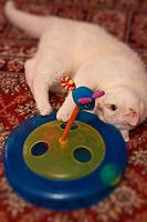 Отдается в дар Игрушка для семьи котиков
