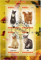 Отдается в дар П.б. Кошки (Руанда)
