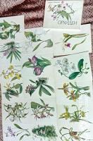 Отдается в дар Набор открыток«Орхидеи»