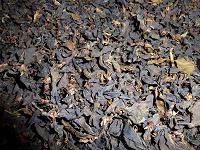 Отдается в дар Чай вишневый зелёный (ферментированный)