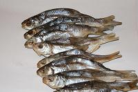 Отдается в дар Сушеная «ржавая» рыба