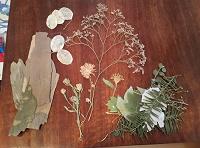 Отдается в дар Сухоцветы для рукоделия